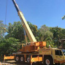 tree-removals-1