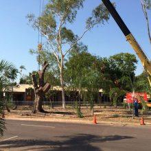tree-removals-2