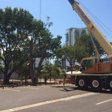 tree-removals