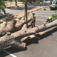 tree-removals-3